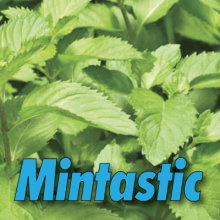 10ml T-Juice Mintastic