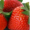 Concentrate - Decadent Vapours Strawberry (10ml)